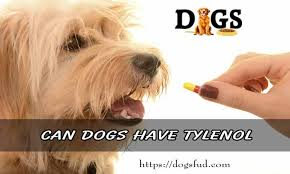 Can Dogs Have Tylenol Is It Is Safe To Give Tylenol For Dogs