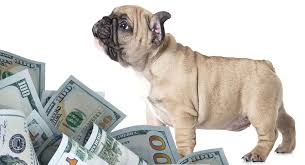 How Much Do French Bulldogs Cost Will This Breed Break The