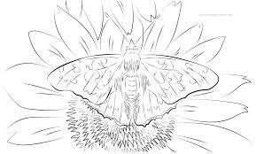 Kleurplaat Volwassen Vlinder Op Bloem Gratis Kleurpaginas Om Te