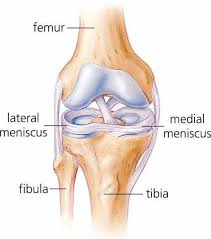 meniscus tear treatment knee