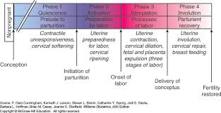 Phases Of Labor Chart Physiology Of Labor Williams Obstetrics 25e