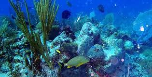 Resultado de imagen de Grandes y bellos corales