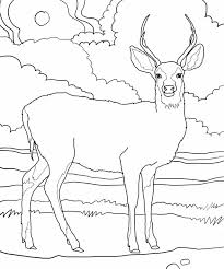 Small Picture Coloring Pages Draw A Deer Pics Photos White Tail Deer Drawing And