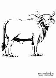 Small Picture Brahman bull coloring page Print Color Fun