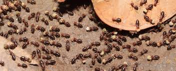 Image result for termite infestation situation
