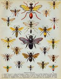 Wasp Identification Chart Wasp Chart In 2019 Bee Art Wasp Tattoo Vintage Bee