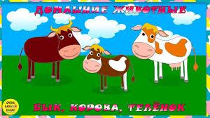 фото быка Hd