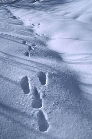Risultati immagini per lunghe orme sulle neve bianca