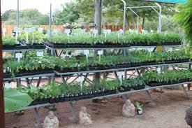 huge selection of herbs