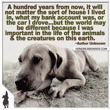 Inspiration Animals Dogs Animal Rescue Pets