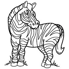 zebra coloring book 9