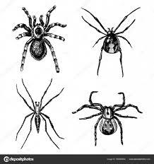 クモやクモの種世界ではハロウィーンの恐怖の古いビンテージの最も