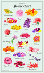 Cut Flower Chart Edible Potted Floral Garden Flower Food List Of Edible