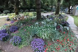 best shade loving flowers for shade gardens