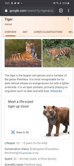 Google 3D animals and objects: Which ones are available and how to use them  in 2021 | List of animals, Animals, Pet tiger