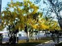 imagem de Dom Macedo Costa Bahia n-8