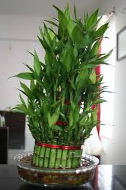 feng shui plants for office. Ergonomic Office Ideas Pot Plants Indoor Durban: Full Size Feng Shui For