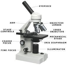 Parts Of The Microscope Microscope Resources Mrs Talleys Biology Bin