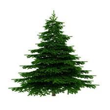"""Résultat de recherche d'images pour """"arbre noel"""""""