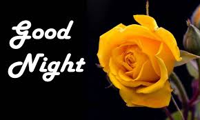 beautiful collection of good night flowers images