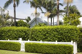 Living Privacy Fence Plant A Privacy Screen Plants That Grow Fast For Privacy