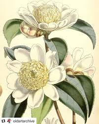Botanicalillustration Instagram Photos And Videos