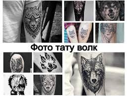 фото тату волк галерея рисунков особенности значение эскизы