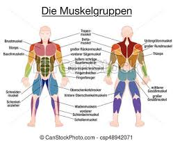 Muscle Diagram German Text Male Body