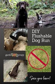 build a diy flushable dog run and save your lawn