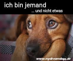 Hunde Sprüche Und Memes Archive Mydreamdogs