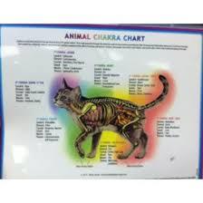 Animal Chakra Chart Animal Chakra Chart Cat