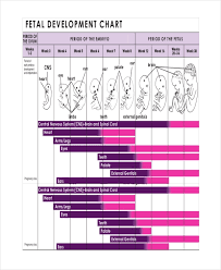 Baby Growth Development Chart Unborn Baby Growth Chart Template 5 Free Excel Pdf