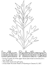 Indian Paintbrush Coloring Pages