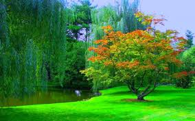 beautiful nature wallpaper download. Contemporary Download Tree And Grass Wallpaper Intended Beautiful Nature Wallpaper Download I