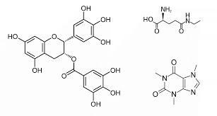 Chemical Compounds In Tea Tea Epicure