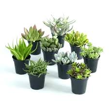 housewarming gift ideas return gifts world market large assorted live potted succulents for g