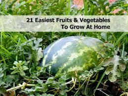 best garden vegetables. Best-crops-for-edible-garden-2 Best Garden Vegetables P