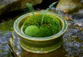 Making moss terrariums \u2013 or not\u2026 | Moss and Stone Gardens