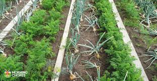 Companion Planting A List Of Good And Bad Companions For