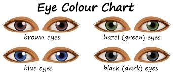 Eye Color Free Vector Art 1 223 Free Downloads