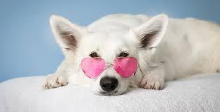 Ubezpieczenie Psa i Kota - Home | Facebook