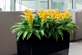 office plant displays. Plant Display Hire Office Displays P