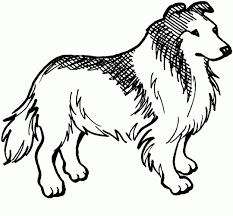 Small Picture Collie dog Free Printable Coloring Pages Great resource for