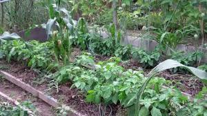 My Kitchen Garden My Kitchen Garden Youtube