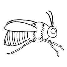 Small Picture Top 15 Bumblebee Coloring Pages For Your Little One