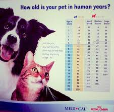 Cat News Central Cat Hospital Cat Hospital In London Ontario