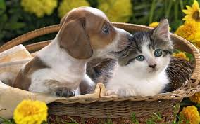 kittens and puppies wallpaper. Perfect Puppies Puppy And Kitten Wallpapers Images  Wallpapers Pictures Photos To Kittens And Puppies Wallpaper D