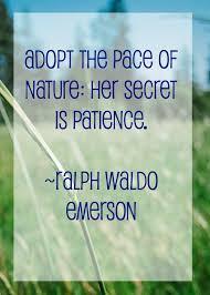 essay writing beauty nature