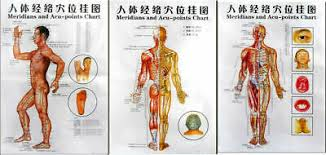3 Poster Charts Acupuncture Human Body Charts Meridians And