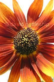 David Nettleship | Flickr